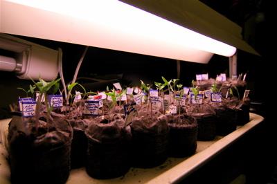 Seedlingsprogress